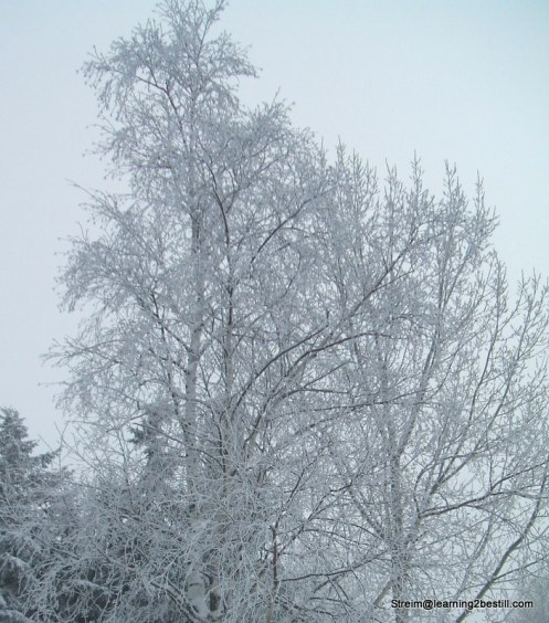 winter's first